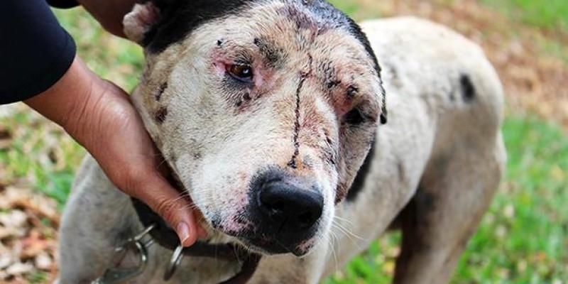 Punição para quem promover rinha de cães no Estado será de até R$ 7,2 milhões.
