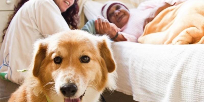 Aprovado em 1ª votação, projeto estabelece terapia assistida por animais e libera o acesso de pets a hospitais de MT