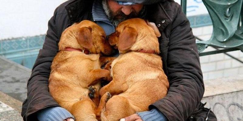 Deputado quer que albergues disponibilizem espaço para animais domésticos em MT