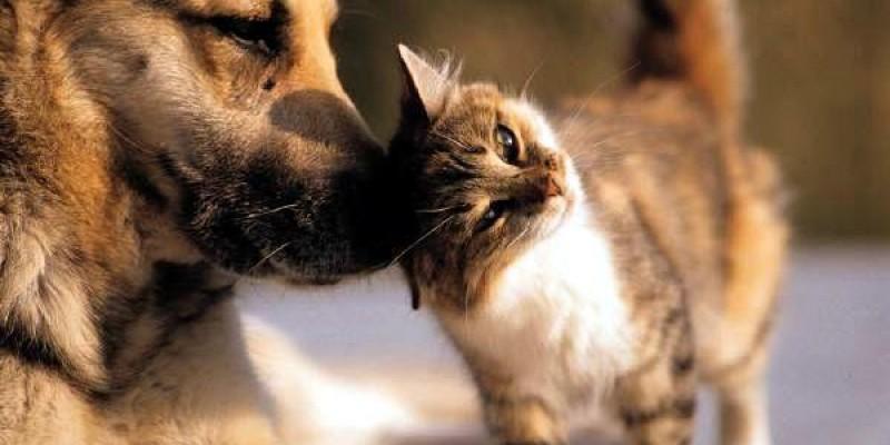 Alimentos apreendidos poderão ser doados a abrigos de animais