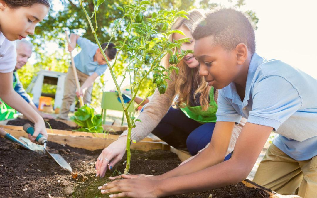 Projeto irá incluir as matérias de educação ambiental e clima nas escolas de Mato Grosso