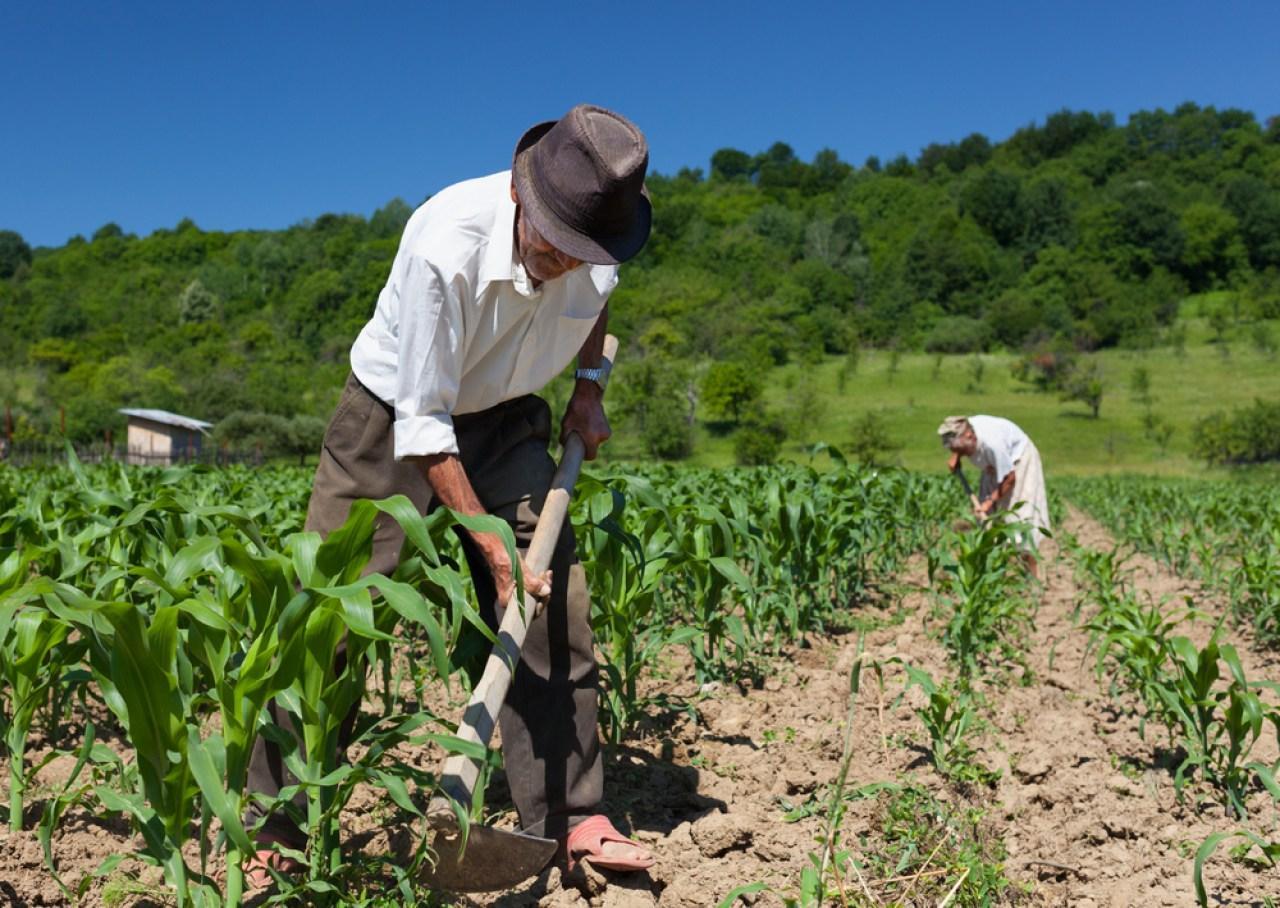 Criação do Programa Estadual de Proteção à Saúde do Trabalhador e Trabalhadora Rural é aprovado na ALMT