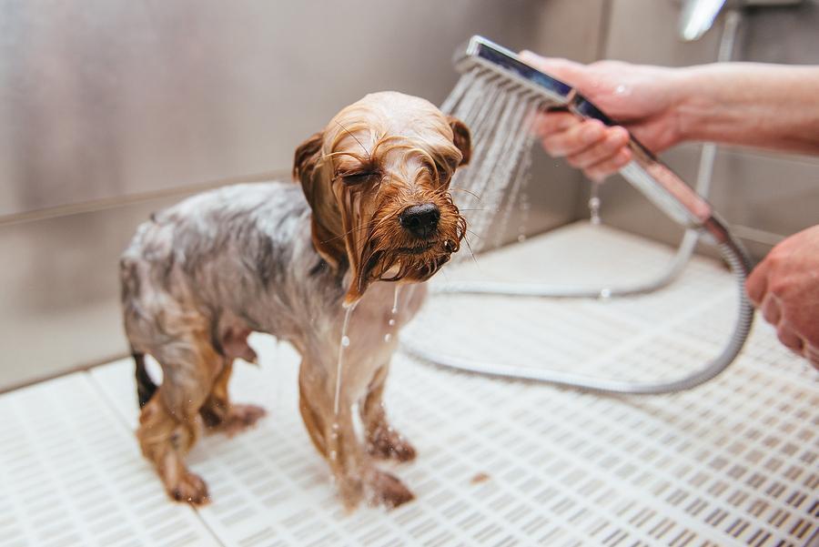 Pet shops e clínicas veterinárias poderão ser obrigadas a instalar circuito interno de câmeras transmitidas em tempo real